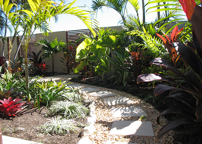Palms for brisbane bribie island garden for Small garden trees queensland