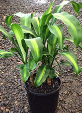 Need to reduce indoor pollution? House plants will help you with that.
